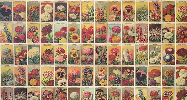 Seed Packets Regismentaire
